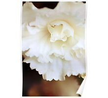 Macro Photography - Flowers Poster