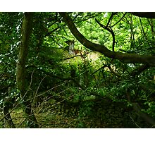 Home Among The Trees Photographic Print