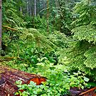 The Rain Forest, Vancouver Island, BC by David Davies