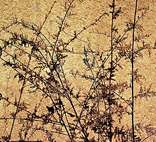 Weeds with Shadows © by Ethna Gillespie