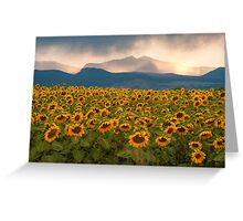 Sunflower Storm Greeting Card