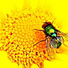 Green Bottle Fly on Yellow Flower by ©The Creative  Minds