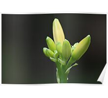 Waiting to Bloom Poster