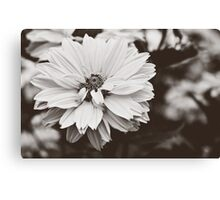 Daisy Flower Canvas Print