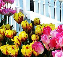 Tulipickets by wandringeye