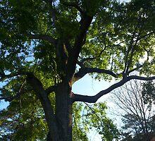 Morning Oak by Emphias