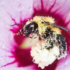 Collecting Pollen. by Lindsay Osborne
