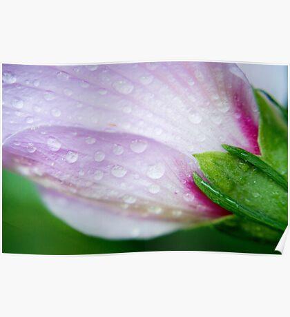 Dew Drops. Poster