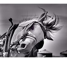 Draft horse at work Photographic Print