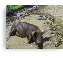 Happier Than a Pig in Mud Canvas Print