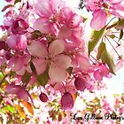 The Pink Blossoms of Spring by Lisa Gilliam Photography