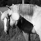 Horse Friendship by jamieleigh