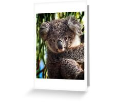 Koala on Raymond Island Greeting Card