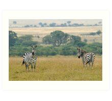 Plains zebras Art Print