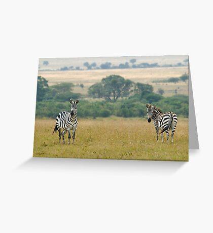 Plains zebras Greeting Card