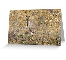Whiptailed Wallaby, Cania Gorge Nat. Park, hinterland,East Queensland. Greeting Card