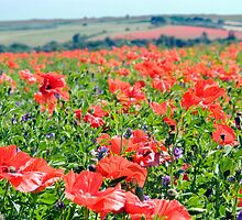 Poppy Fields Compton Berkshire by Jim Hellier