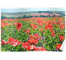 Poppy Fields Compton Berkshire Poster