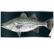 White Bass Poster