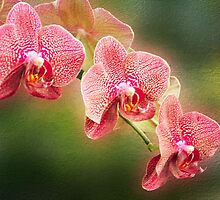 Red and White Orchids on a Stem by MotherNature2