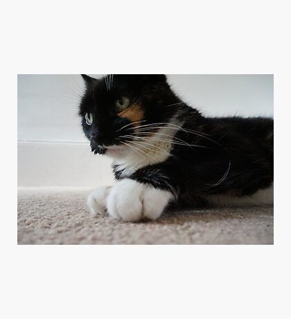 White Socks Photographic Print