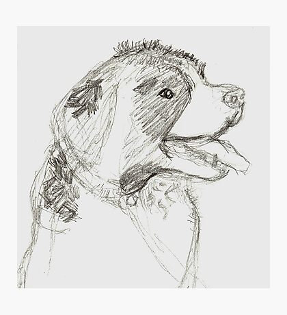 St Bernard Sketch Photographic Print
