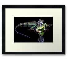 Dragons reflection Framed Print