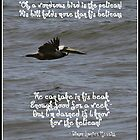 The Wondrous Pelican by Paula Tohline  Calhoun