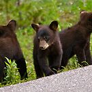 Bear Cubs by Luann wilslef