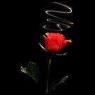 iPAD CASE Queen of flowers by Darren Bailey LRPS