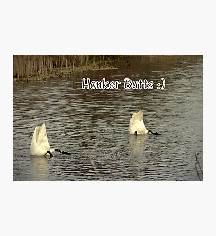 Honker Butts Photographic Print