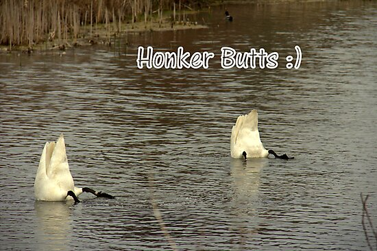Honker Butts by Rich Fletcher