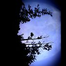 iPAD CASE Raven took the light by Darren Bailey LRPS