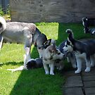 Zeka & All Six Of Her Puppies:) by jodi payne