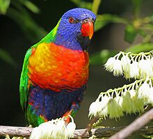 I have all the colors of the rainbow! by jozi1