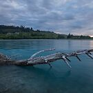 The Fallen _ Rakaia River NZ by Barbara Burkhardt