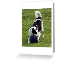 I love my Jolly Ball! Greeting Card