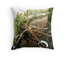 Nursery Web Spider (Tinus peregrinus) Throw Pillow
