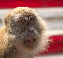 Cheeky Monkey by MunschkinMedia