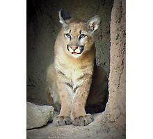 Mountain Lion Cub (Cruz) Photographic Print