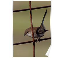 Wren on a Rusty Gate Poster
