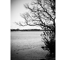 thin as sticks Photographic Print