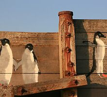 Whitstable Penguins by Touchstone21