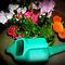 *AVATAR/Flowers & Garden Accessory* challenge - Gorgeous Flower Cards*