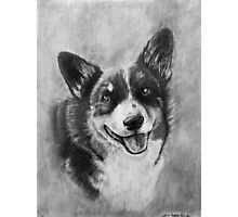 Dog Portrait Commission 2 Photographic Print