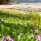 Coastal Flowers - Coral Coast, Fiji by clickedbynic