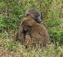 Lovely olive baboons by Valerija S.  Vlasov