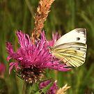 White Butterfly by ienemien