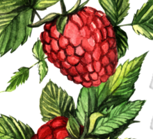 Raspberries Sticker