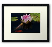 Water Lily Friends ! Framed Print